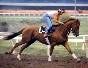 Nance and Verbalpleasure, Santa Anita Racetrack 1987