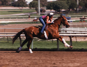 Nance and Verbalpleasure, Santa Anita Racetrack 1988