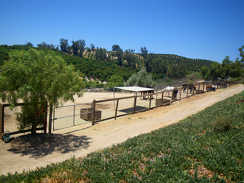 Pastures with view of neighboring orchards