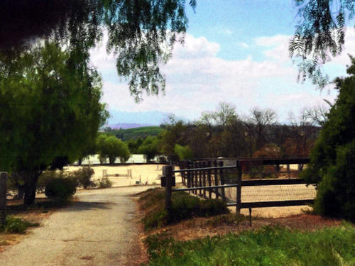 View down driveway by upper paddock